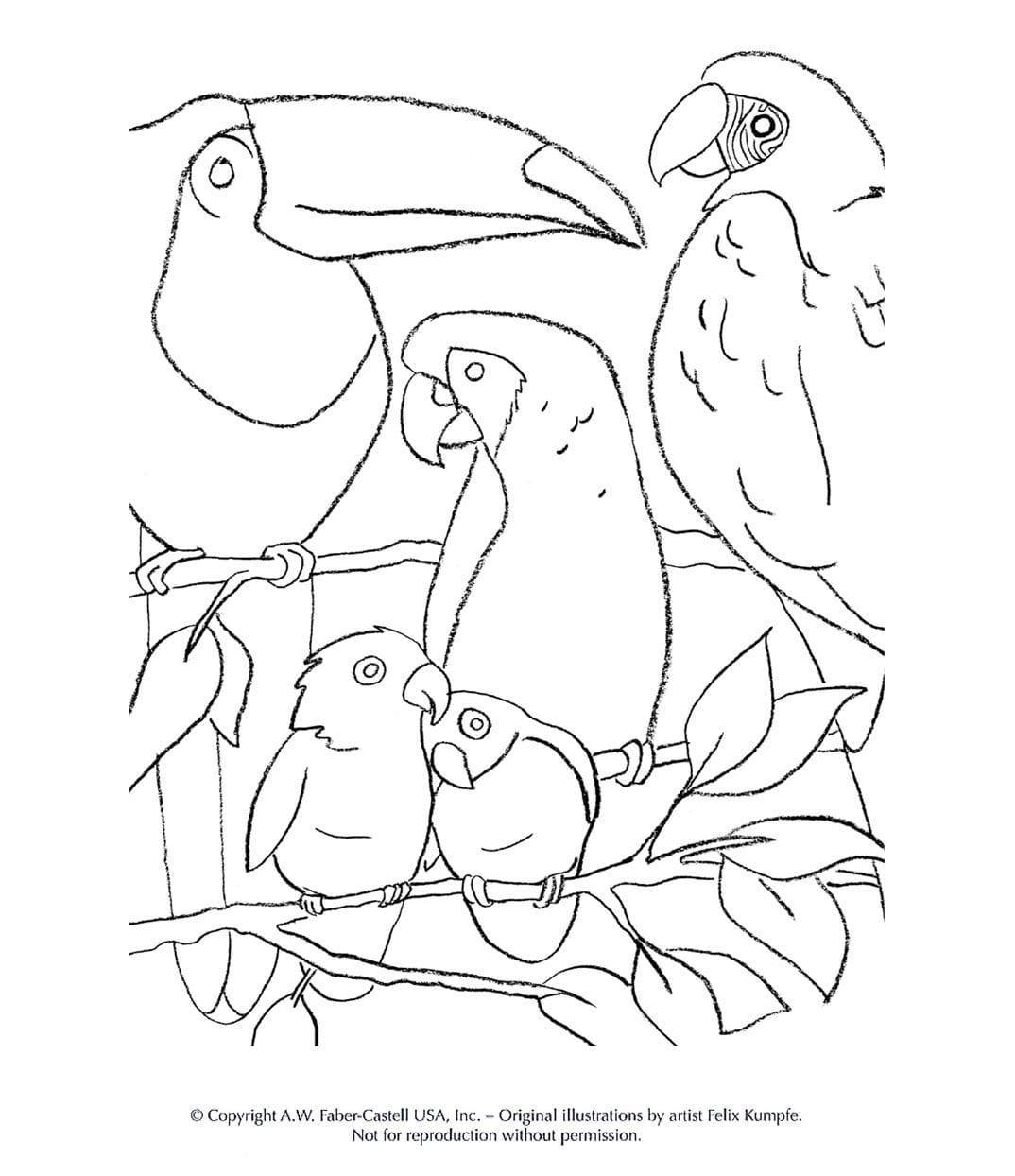 image content detail half children colouring pages animals tropical birds templatehx