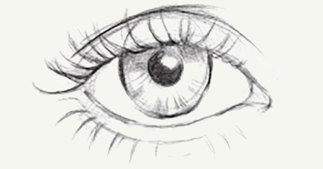c0d064a7f72 I suggest studying the curves of the eyelashes since they change slightly  from one end of the eyelid to the other.